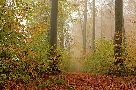 Martin Stankewitz - beech forest autumn leaves in fog