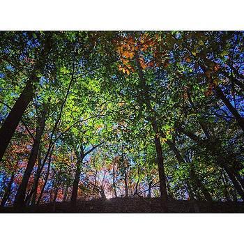 Beech Forest.  #beechforest by Ben Berry