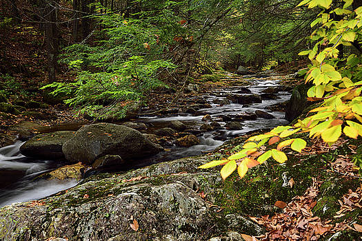 Reimar Gaertner - Beech leaves at Sterling Brook after the Falls with boulders and