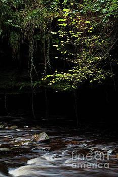 Beech sapling and the River Gelt by Gavin Dronfield