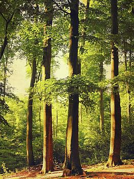 Beech Tree Forest in Evening Light by Dirk Wuestenhagen