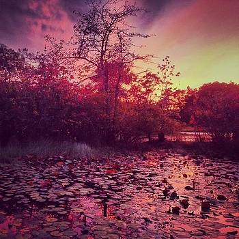 #beechforest #provincetown #sunset by Ben Berry