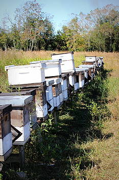 Beehives II by Beth Vincent