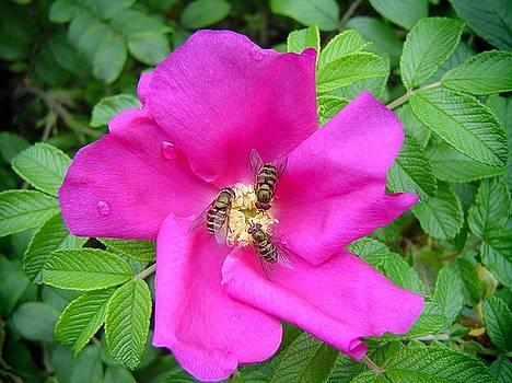 Bill Kellett - Bees in the Blossom