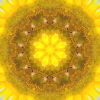 Bees Kaleidoscope by Natalie Rotman Cote