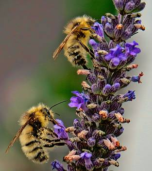 Bees Knees by Rick Lawler
