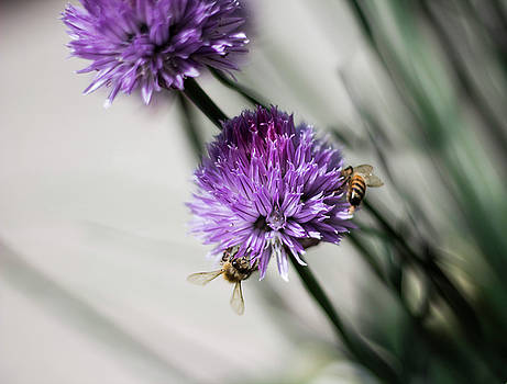Bees on a flower by Celena Sandaker