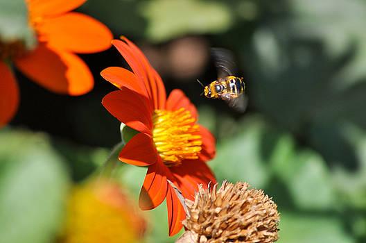 Beesinuss by Chris Baker