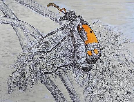 Caroline Street - Beetle Bug