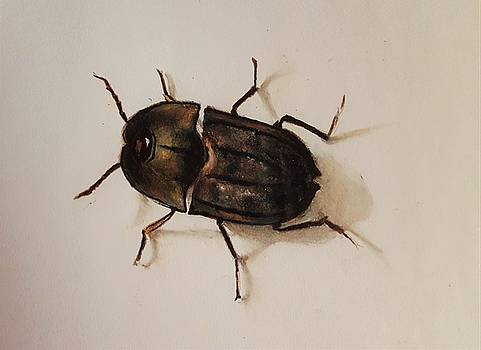 Beetle  by Gilca Rivera