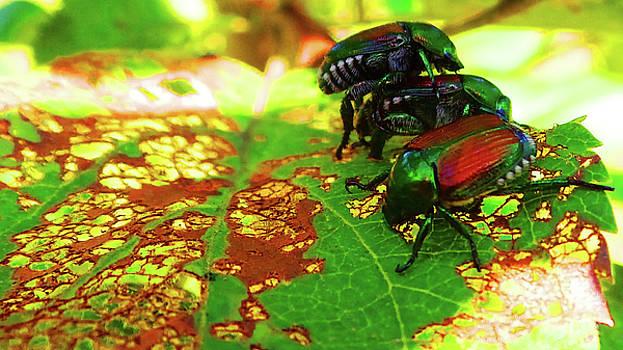 Mike Breau - Beetlemania-A Bugs Life