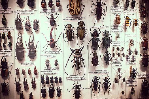 Beetles by David Ridley