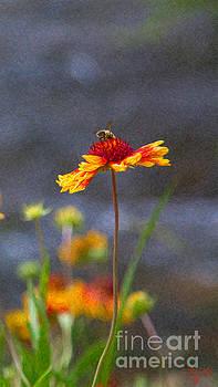 Omaste Witkowski - Beeutiful Orange Methow Valley Flowers by Omashte