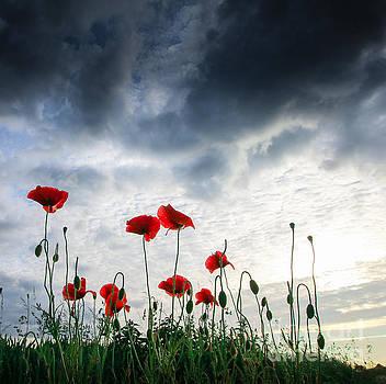 Before the Storm by Franziskus Pfleghart