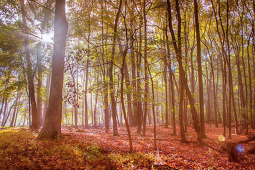 Beginning of fall by Rima Biswas