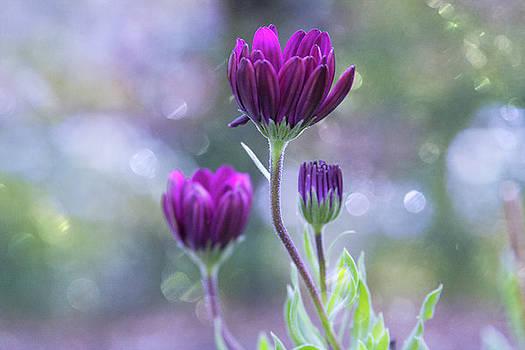 Beginning to Bloom by Susan Schmidt