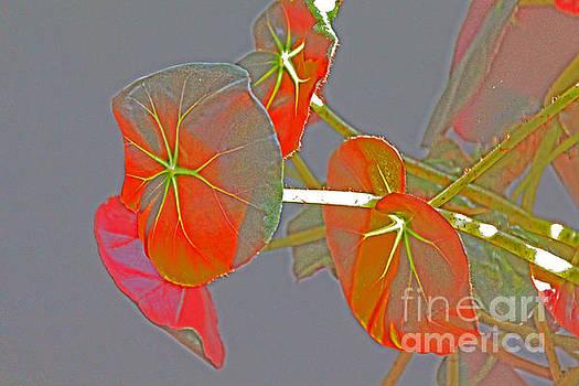 Begonia Flowers Imprsionistic by David Frederick