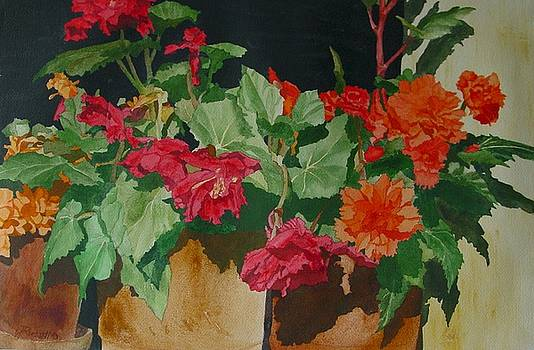 Begonias Flowers Colorful Original Painting by Elizabeth Sawyer