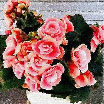 Begonias by Peggy De Haan