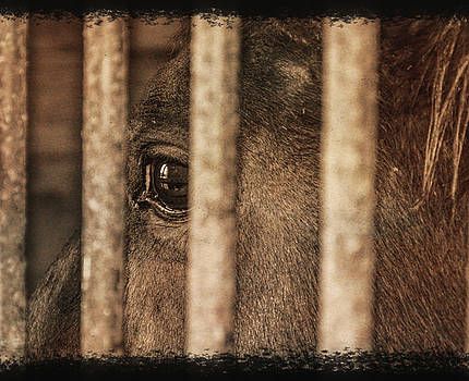 Behind Bars by Jim Cook