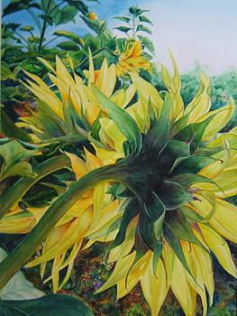 Behind the Scenes - Sunflower 2 by Doris Daigle