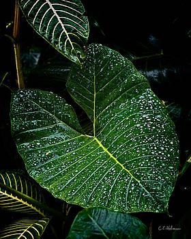 Christopher Holmes - Bejeweled Leaf