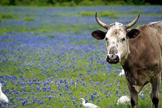 Texas Beauty by Debi Demetrion