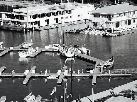 Belmont Harbor by Tephra Miriam