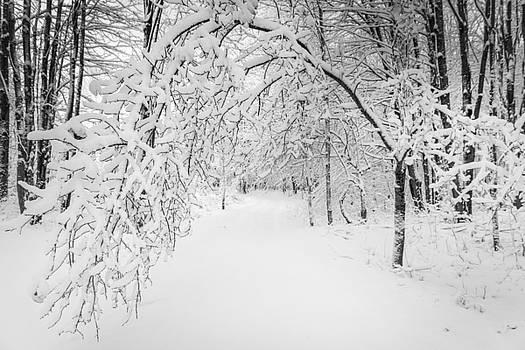 Chris Bordeleau - Below Winter Laden Branches