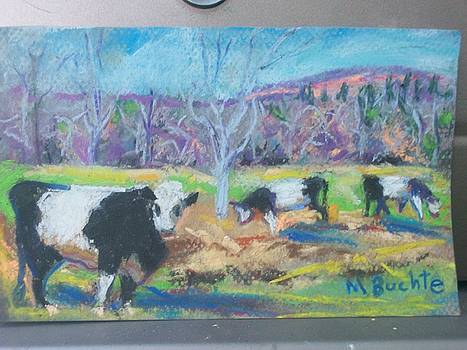 Belted Cows by Margaret Buchte