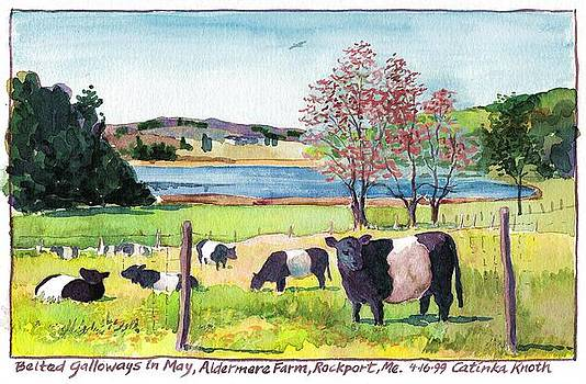 Belted Galloway Art  Maine Cows in May by Catinka Knoth