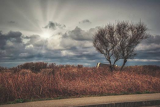 Bench and tree by Bob Orsillo