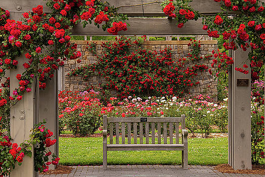 Bench in the Rose Garden by Nancy Myer