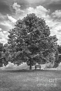 Larry Braun - Bench under a tree