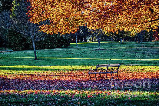 Doug Berry - Bench Under Tree in Autumn at Maymont 9660T
