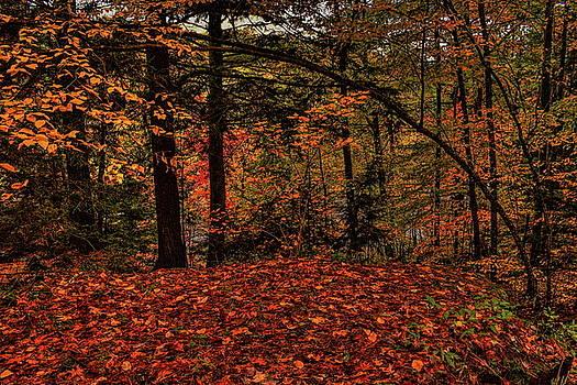 Dale Kauzlaric - Bending Over Fallen Leaves