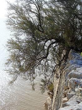 Cathy MONNIER - bending over the estuary