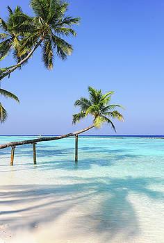Jenny Rainbow -  Bending Palm Trees over Blue Ocean