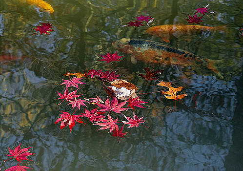 Beneath the Pond's Surface by Nena Pratt