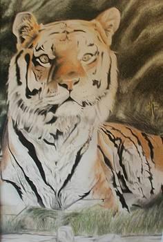 Bengal Tiger by Bennie Parker