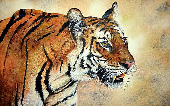 Bengal Tiger by Paul Dene Marlor