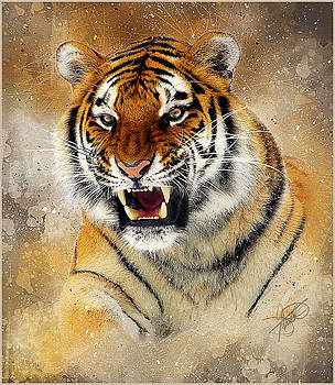 Bengal Tiger by Tom Schmidt