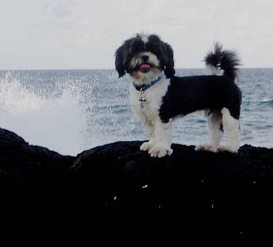Benny on the Rocks by Chuck Snyder