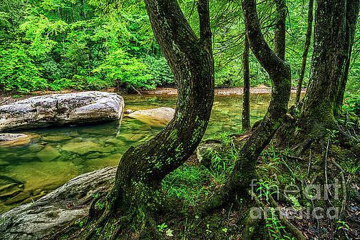 Bent Trees Cranberry River by Thomas R Fletcher