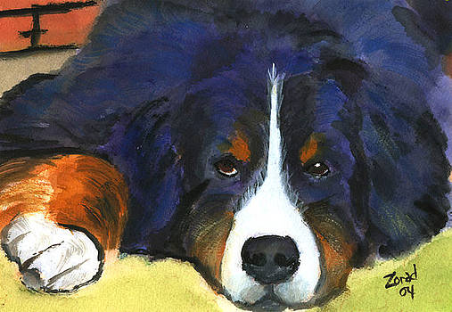 Mary Jo Zorad - Bernes Mountain Dog Watercolor Dog Print