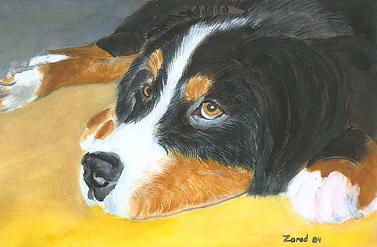 Mary Jo Zorad - Bernese Mountain Dog art print