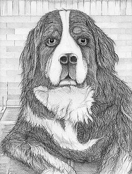 Bernese Mountain Dog  by Jason Girard