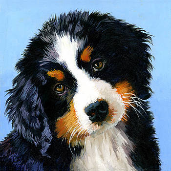 Bernese Mountain Puppy by Alice Leggett