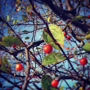 #berries #nature by Crystal Hammond