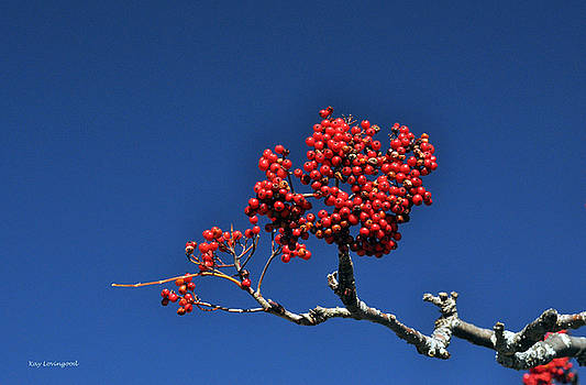 Kay Lovingood - Berries on a Blue Sky